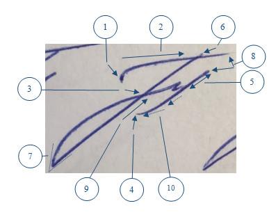Критерии оценки подписи человека