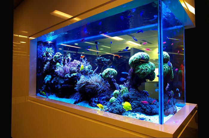 О влиянии материала на жизнедеятельность аквакультуры